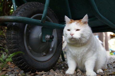 猫車のタイヤ - かご猫 Blog
