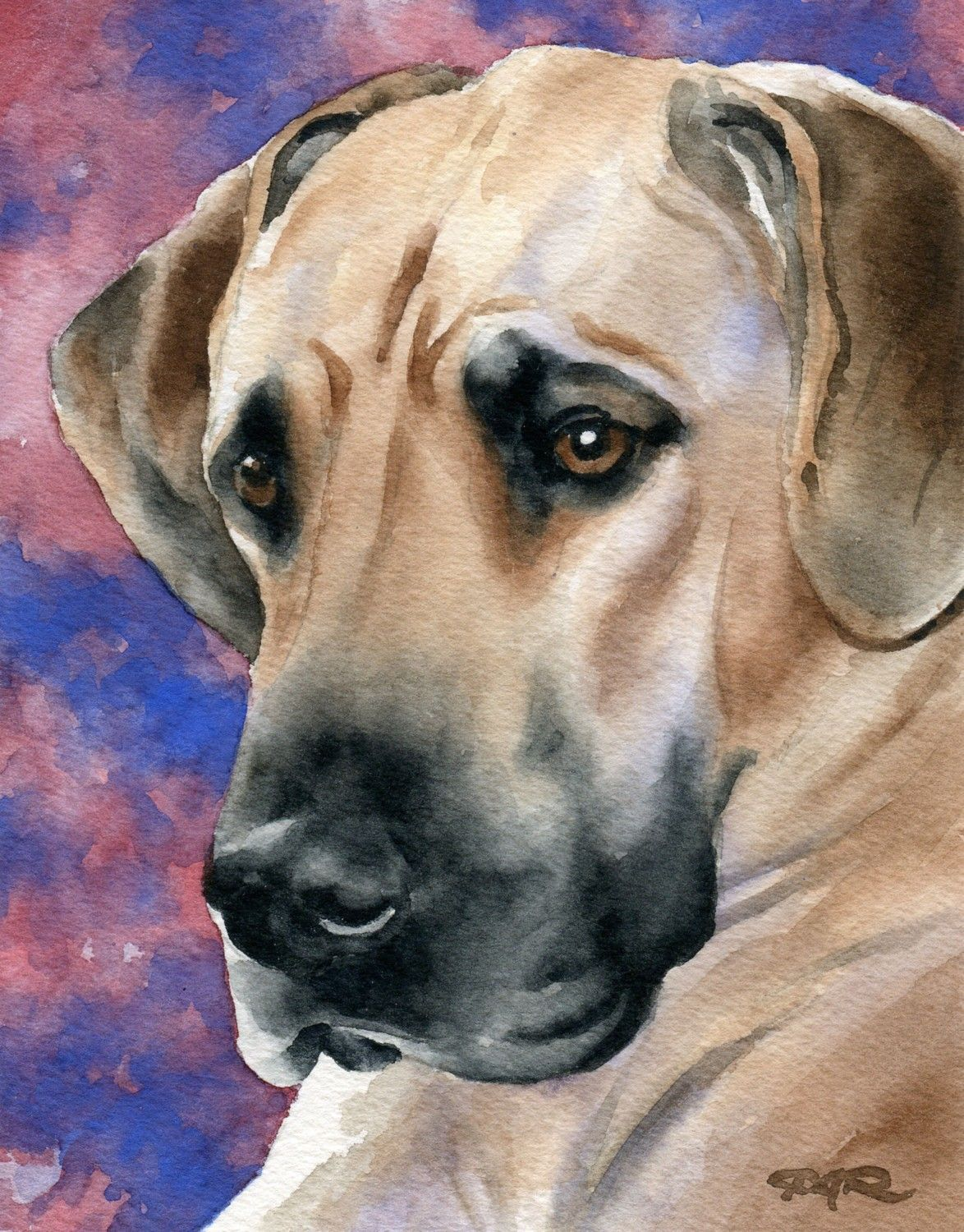 Great Dane Art Print By Watercolor Artist Dj Rogers Dog Art Dog