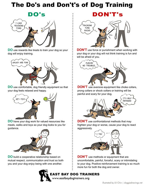 Do's and Don't's of Dog Training - Tails magazine (illustrated by Lili Chin / Doggiedrawings.net)