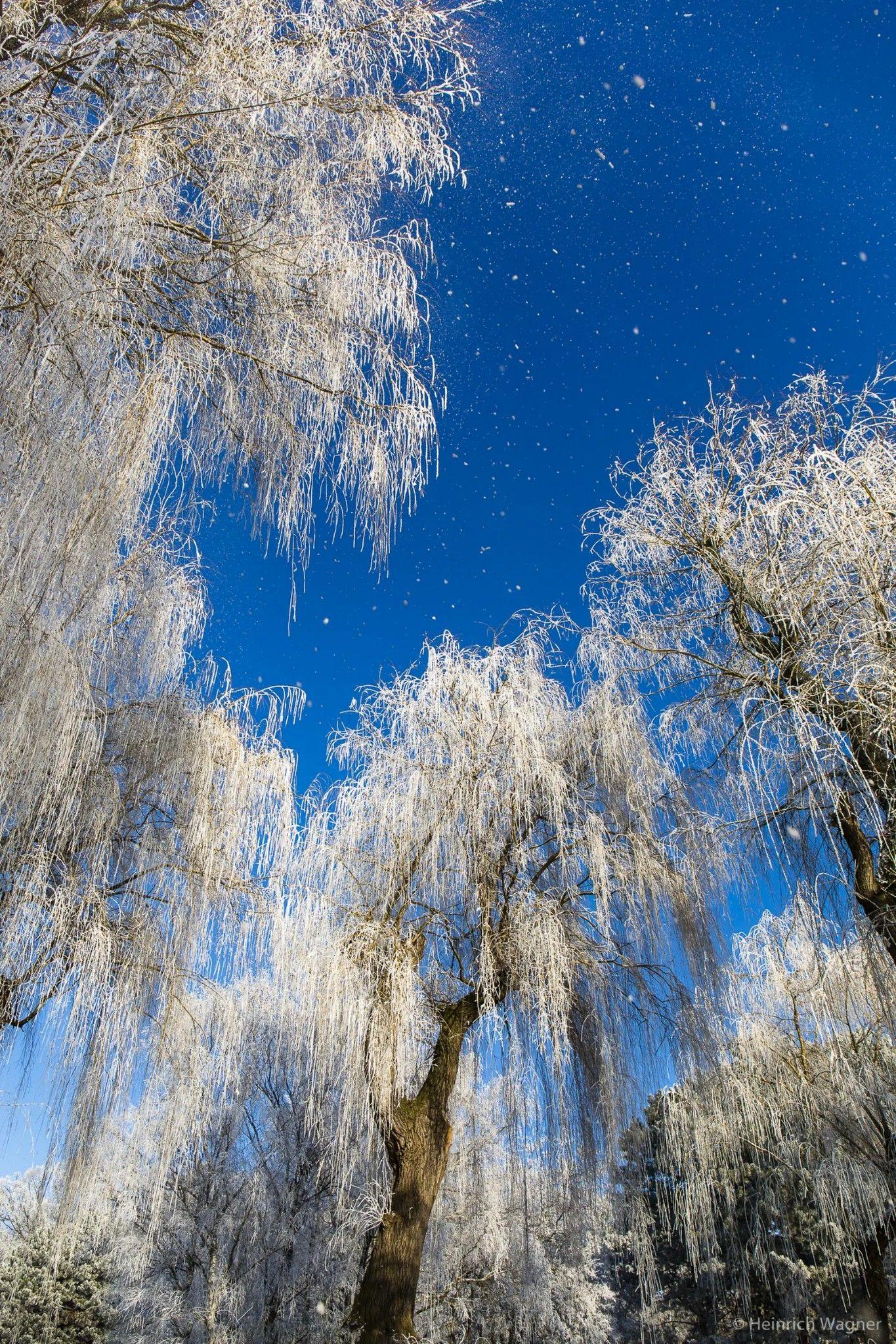 Willows In Winter Vienna Heinrich Wagner