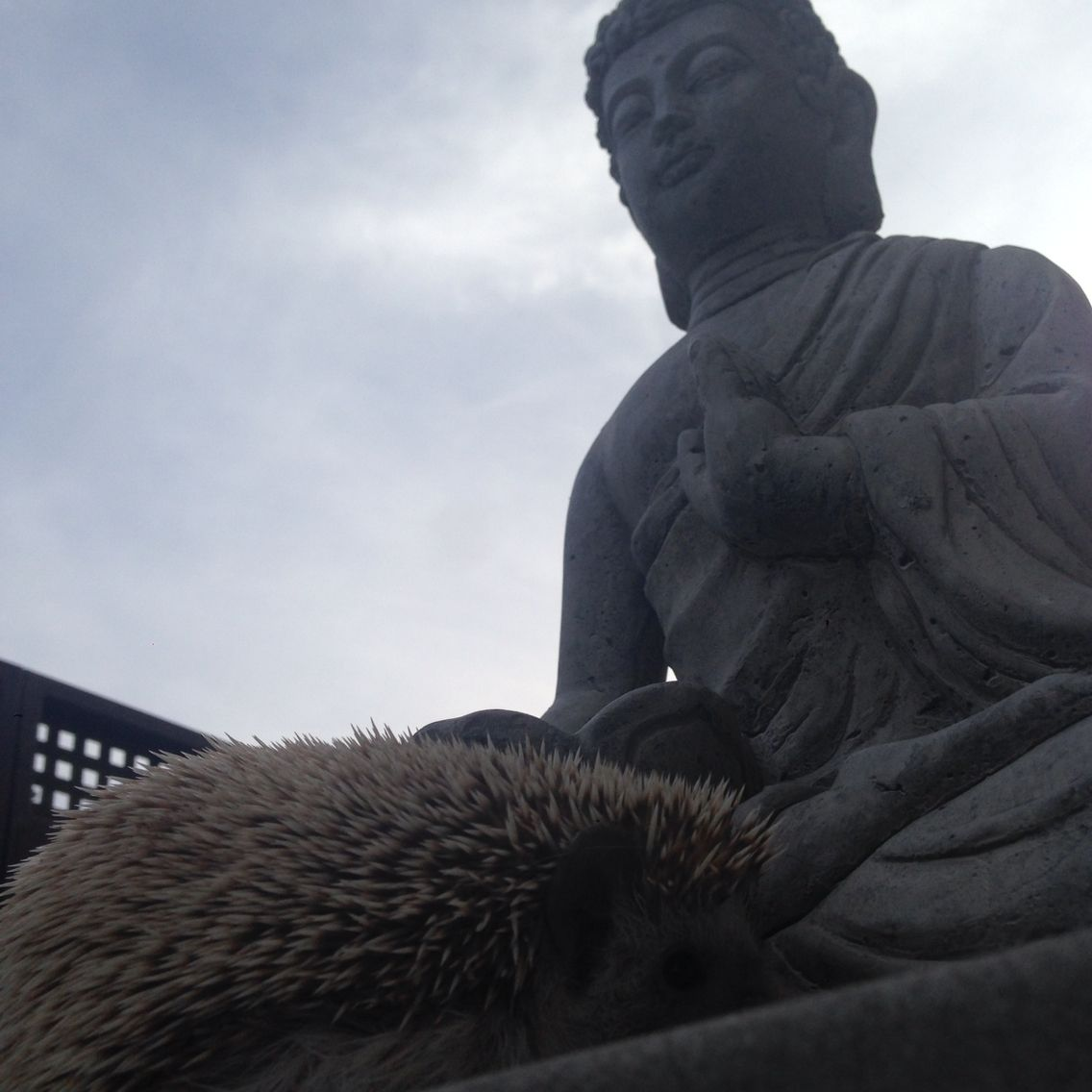 Momento zen: como a meditação ajuda com a ansiedade