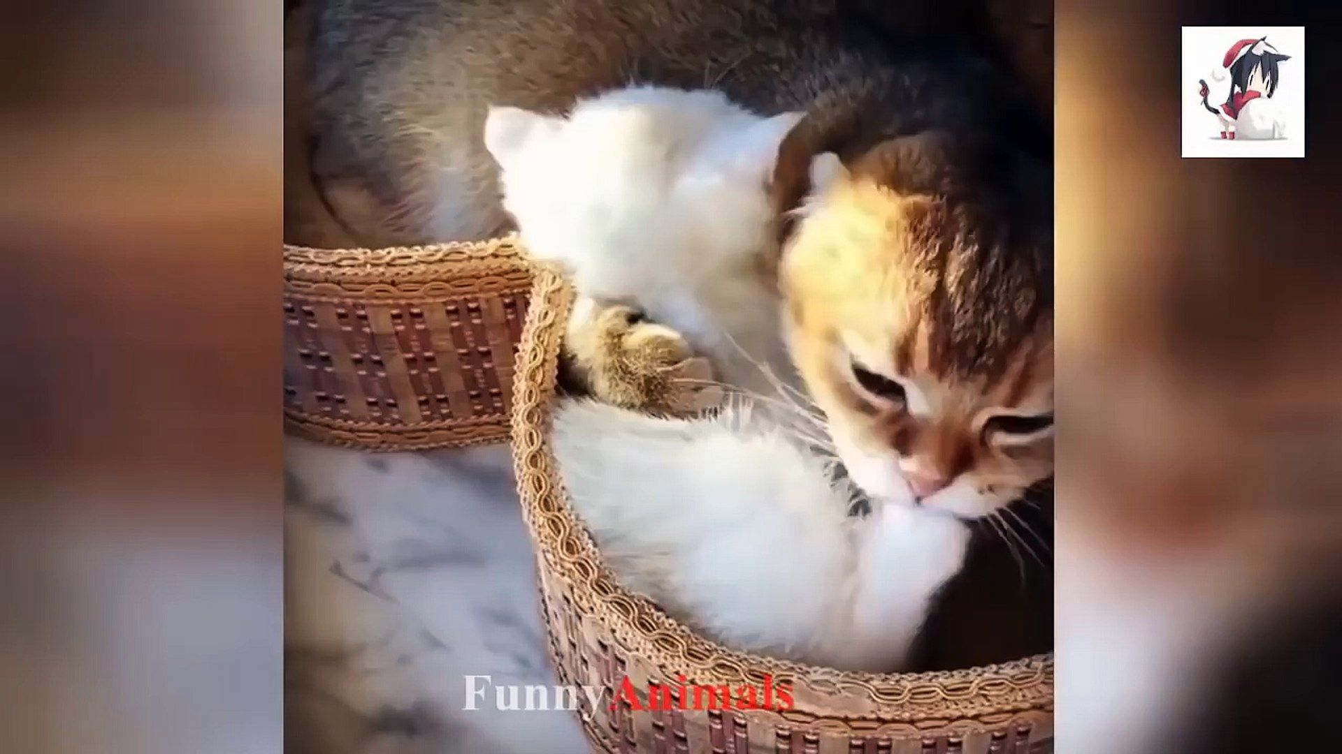 Mother Cats And Kitten Compilation 2018 So Adorable So Cute Subscribe For New Video Fanpage Thanks For Watching Please Like Share Amp Comment