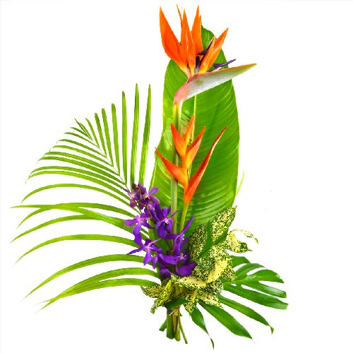 paradis est un superbe bouquet exotique tout en hauteur compos d 39 h lico. Black Bedroom Furniture Sets. Home Design Ideas