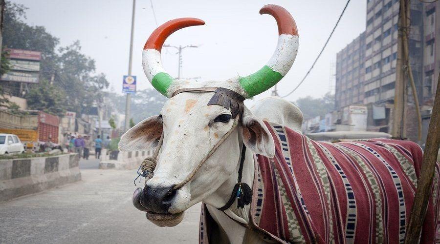 Ofertón 2: Encantos de la India