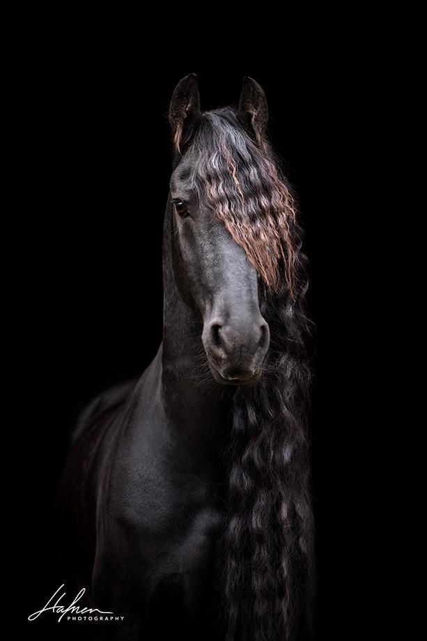 Gemeinsame Friese vor schwarzem Hintergrund | www.hafnerphotography.ch &UQ_55