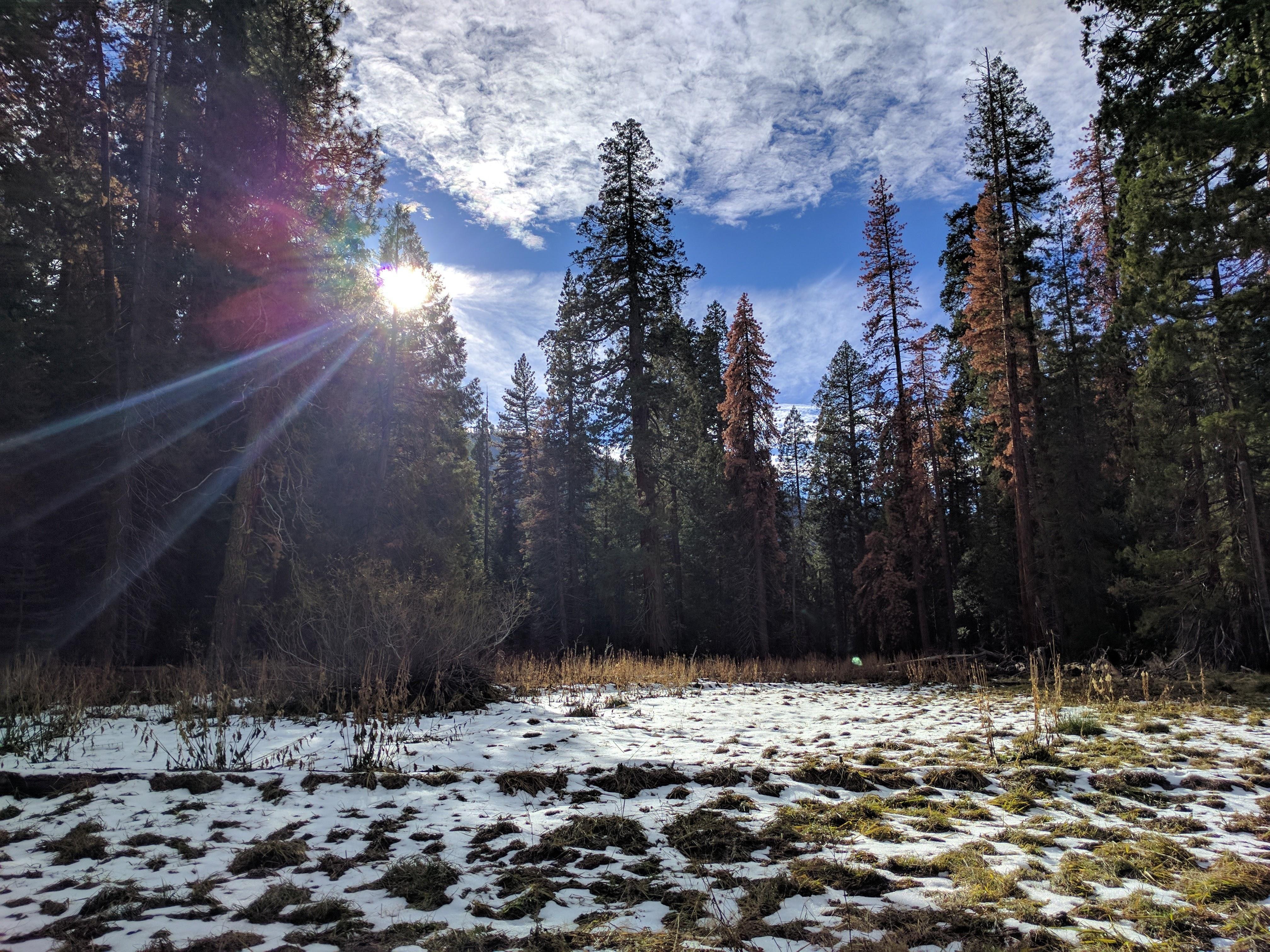 Sequoia Meadow [4032  3024] [OC]