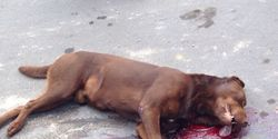 Friendly neighborhood dog SHOT while playing with children in Guadalajara, Mexico! Act Now!