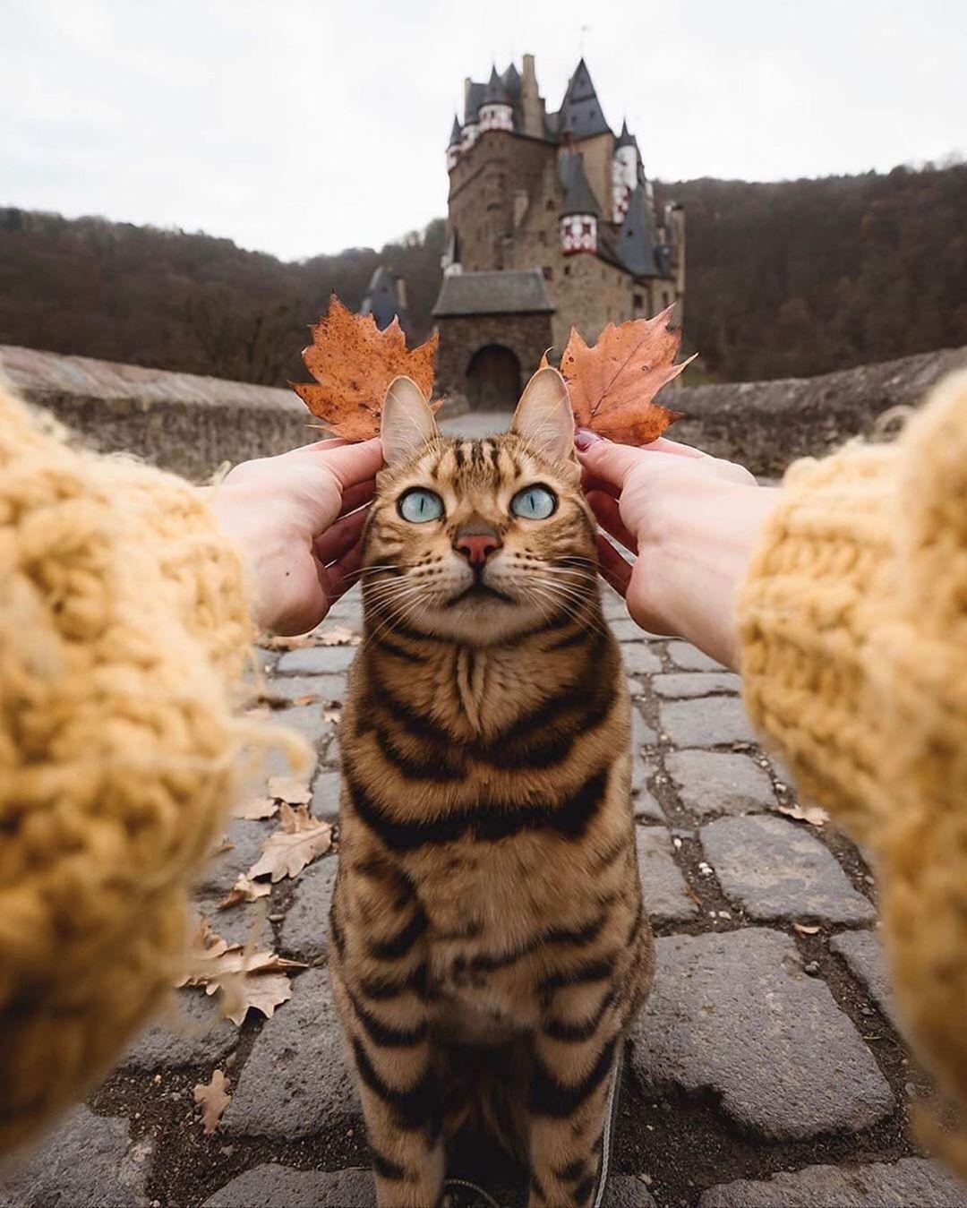 Découvrez le monde du business in 2020 Animals, Cat