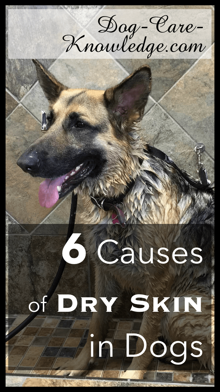 Dog Dry Skin This Is Why Your Dog Has It Now See What To Do Dog Dry Skin Dog Dry Skin Remedy Itchy Dog