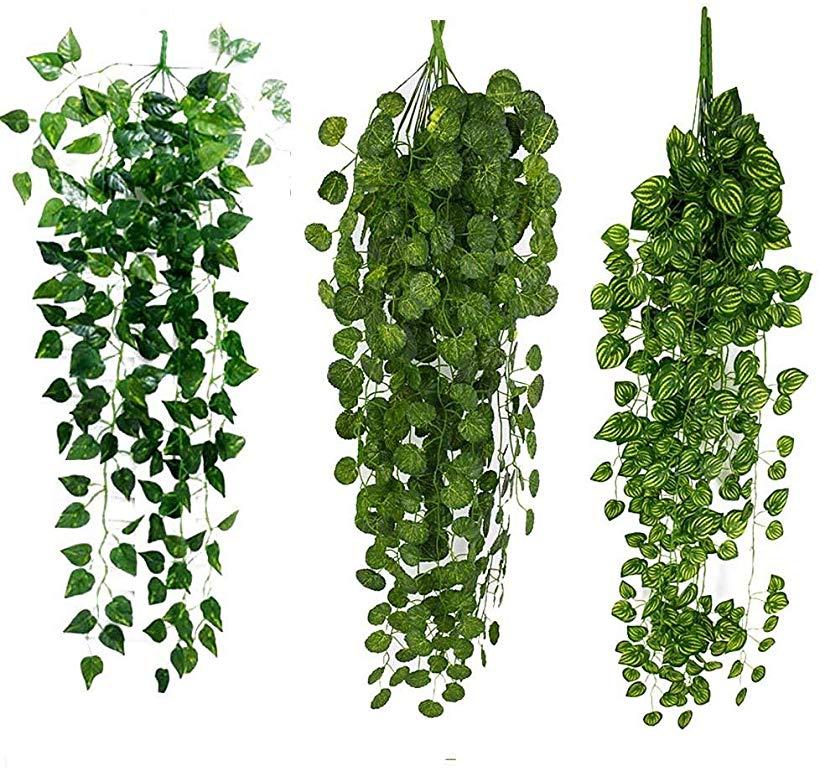Cutout Plant Hanging Ivy Tree Photoshop Plant Texture Plants