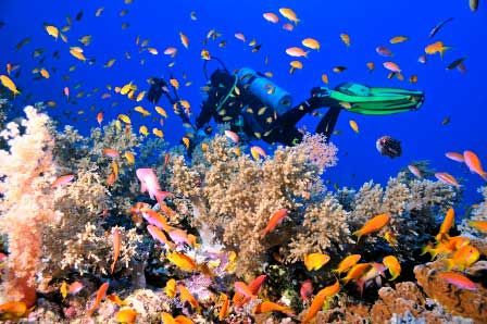 A day tour on a cruise in the red Sea from Safaga Port to enjoy the colorful fish & corals,snorkel, swim, lunch, back to Safaga Port.