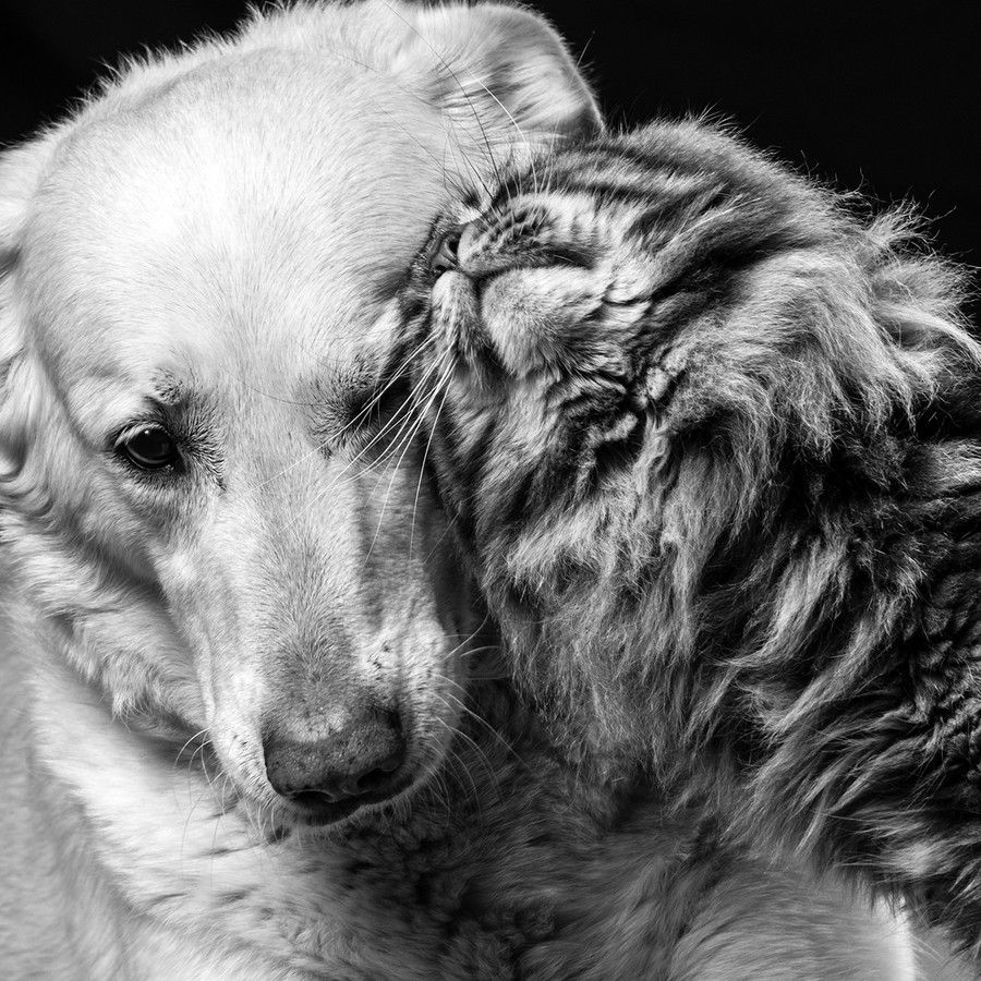 Photo Love By Ramona Steiner On 500px