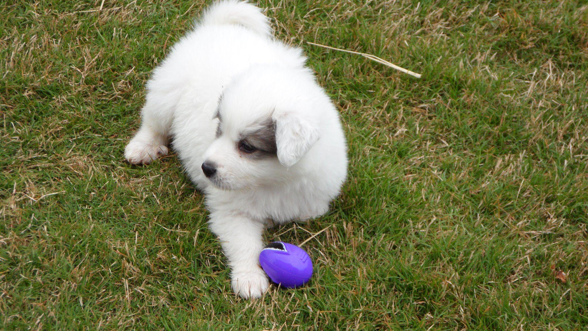 REUNITED!!!! TONEY, AL (near Huntsville, AL) Dog lost