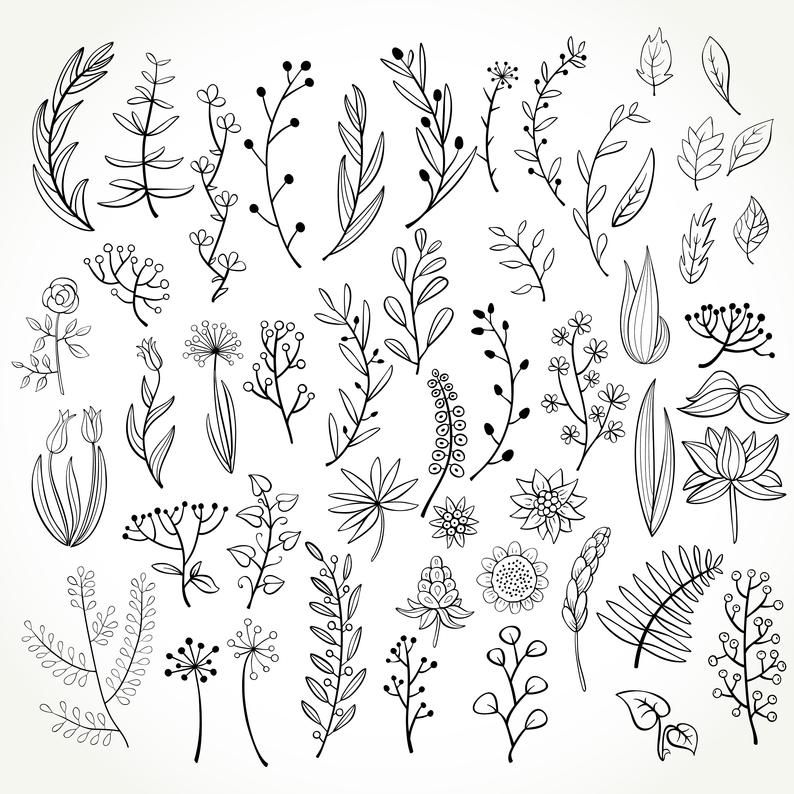 Set of 50 doodle botanical elements, PNG doodle fl