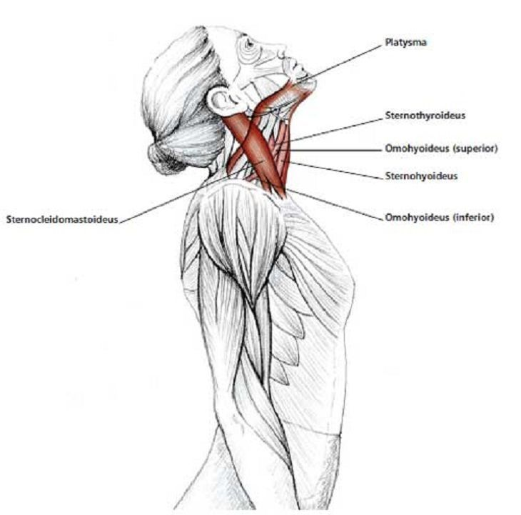 Easy Stretches - Release - Tension - Neck - Shoulders   Muscle ...
