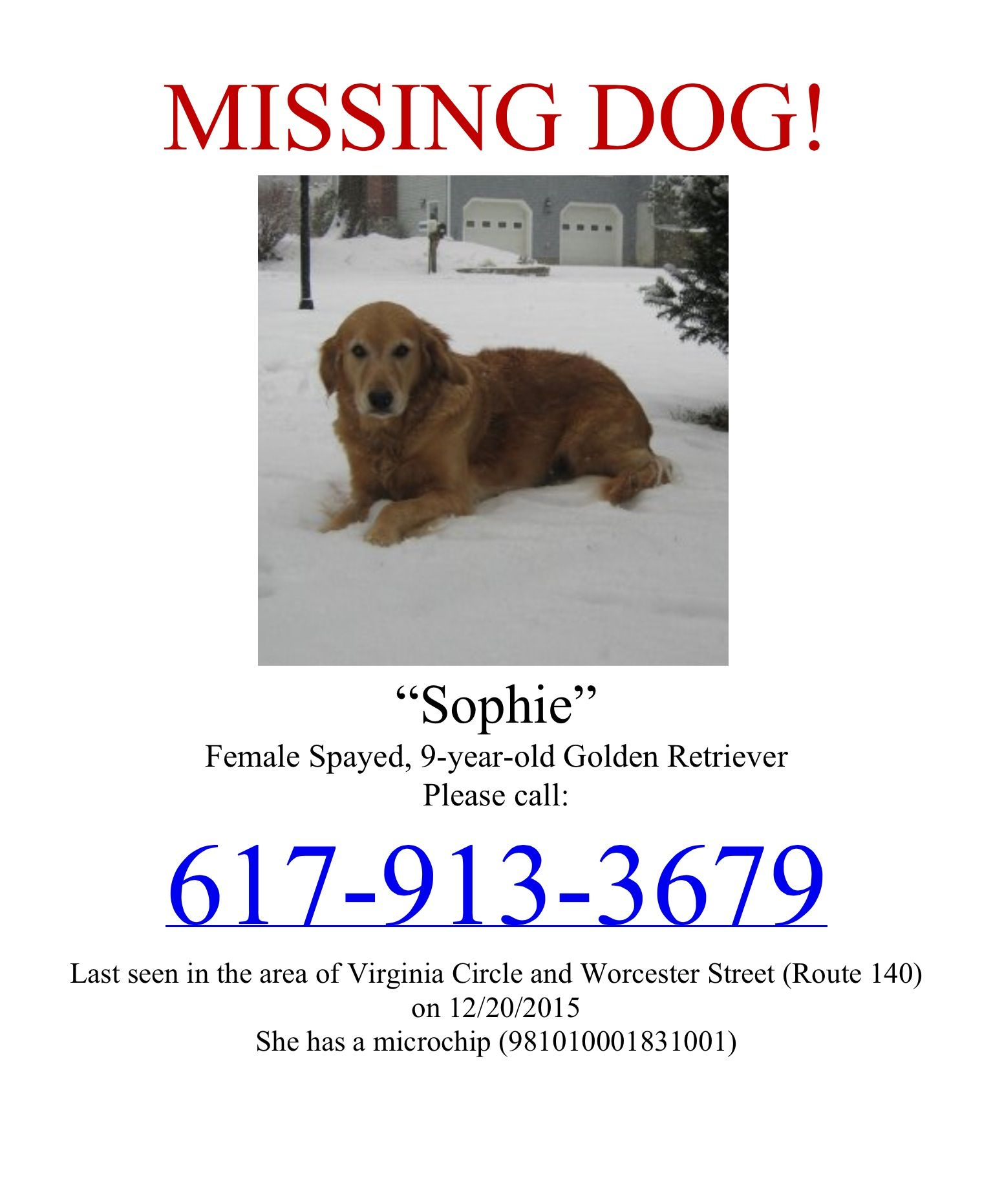 Lost Dog Named Sophie Grafton, MA Golden Retriever Lost