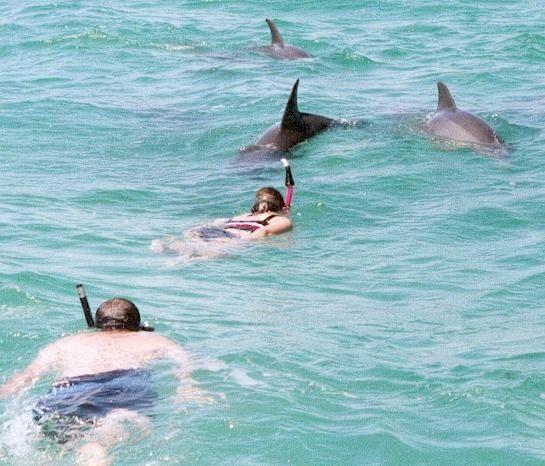 Swim With Dolphins I Want To Do This Key West Key West Florida Travel Key West