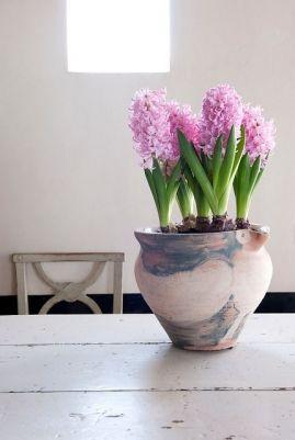 Przynies Wiosne Do Domu Kwiaty Cebulowe W Doniczkach Artykuly Blumen