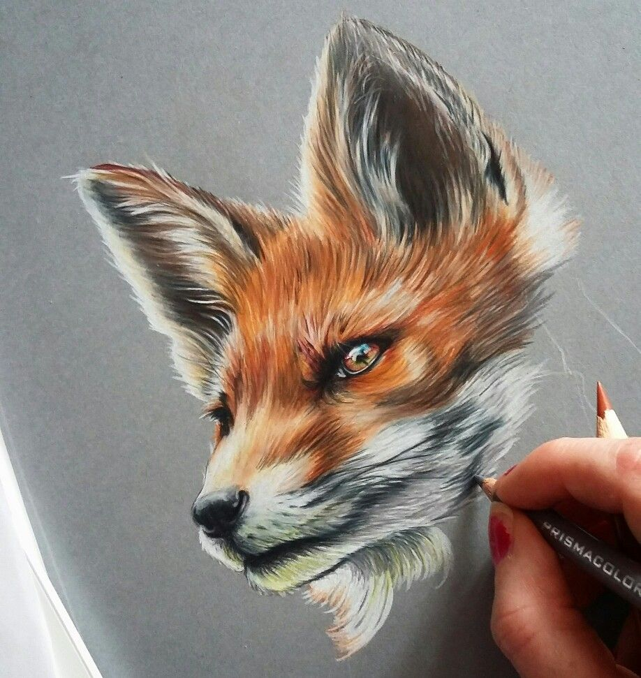 Prismacolor Realistic Fox Drawing 3d art drawing, Animal