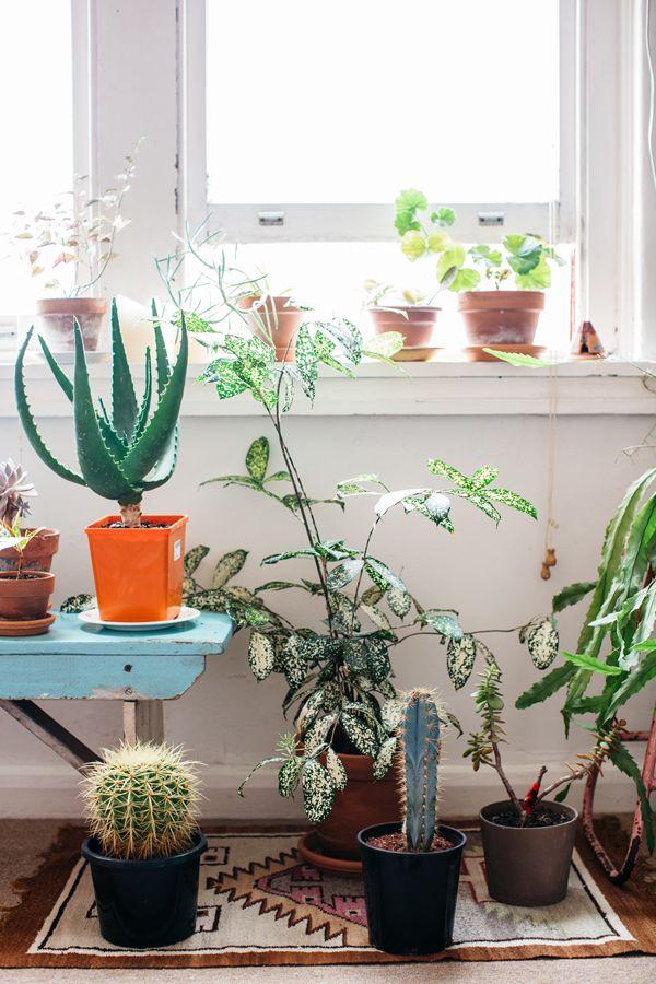 LITTLE CASA LARGE ON PLANTS.