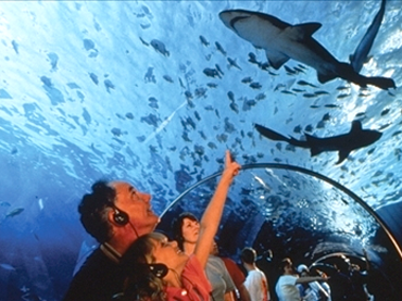 Sea Life Aquarium at Mall of America   Mall of america ...