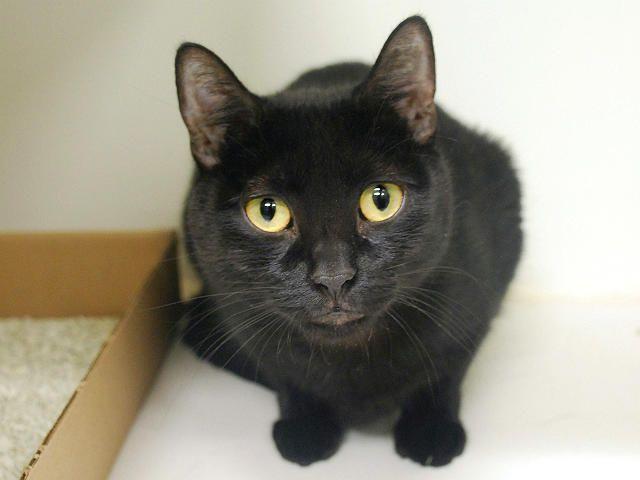 FELICIA A1065479 NYC AC&C Urgent Cats … Cat behavior