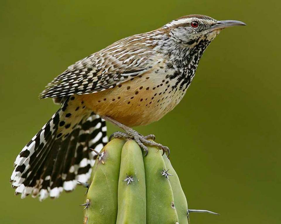11+ Animals native to arizona images