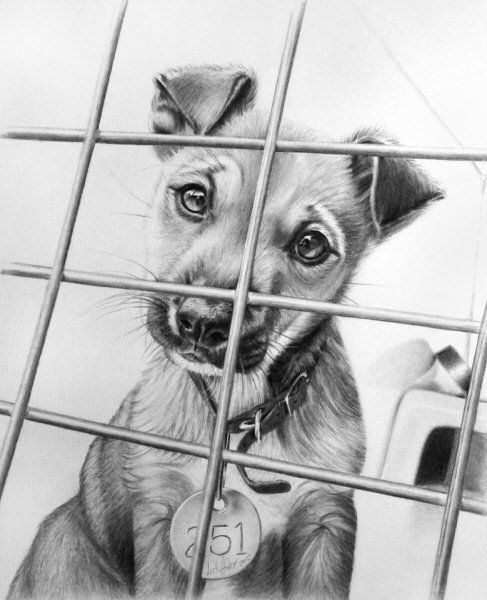 Drawing  Sad dog :( | Art | Realistic pencil drawings, Pencil