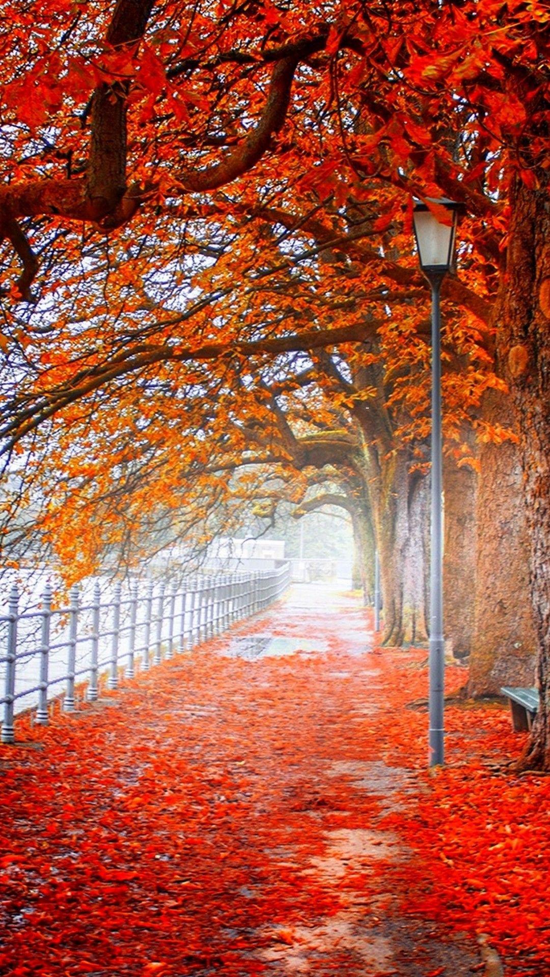 Autmn Landscape 4k Ultra Hd Wallpaper 4k Wallpaper Net Iphone Wallpaper Photography Landscape Wallpaper Landscape
