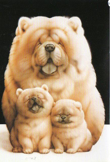 Amazing Mixed Chubby Adorable Dog - f43c7d066bf6f955733ead3200159826  Photograph_255259  .jpg