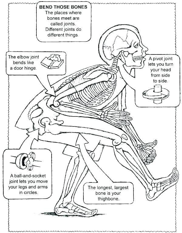 anatomy labeling worksheets printable human and physiology ...