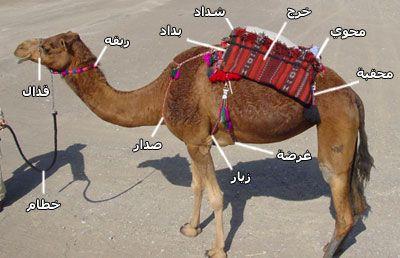 رحل الابل Recherche Google Books Free Download Pdf Animals Pdf Download