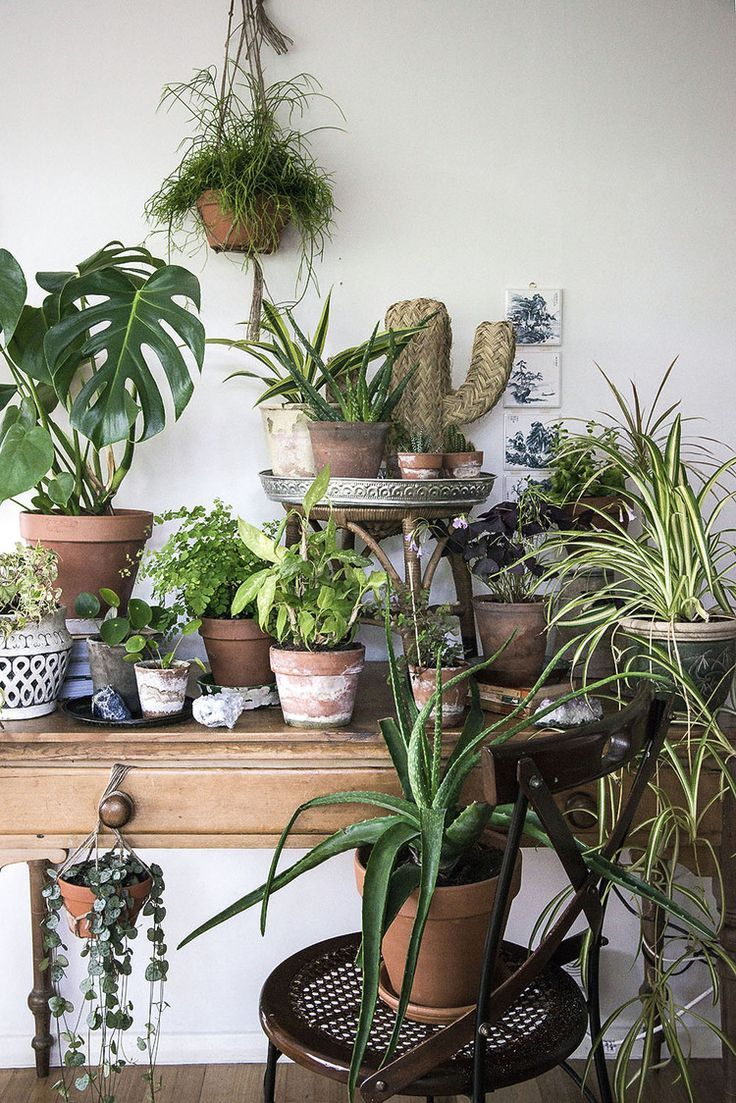 Urban Jungle Decorating Kitchen: My Plant Gang With Urban Jungle Bloggers...