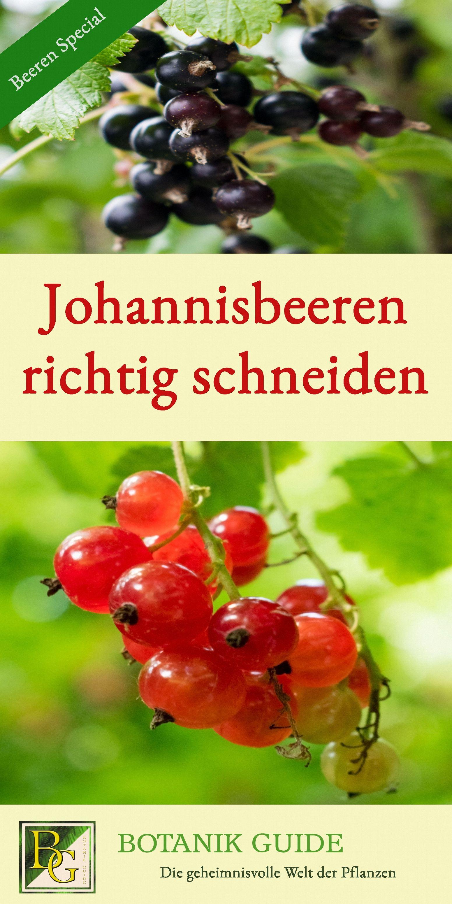Üppige Johannisbeer-Ernte mit dem richtigen Schnitt