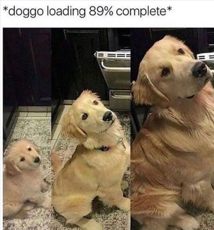 Nbsp Cute Animal Memes Funny Animal Memes Animal Memes Clean