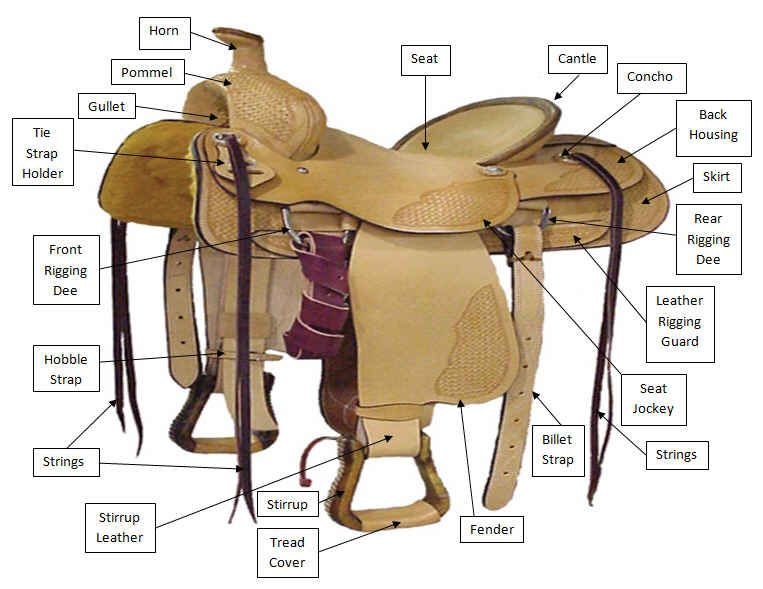 colorful pictures of western saddles horse and saddle diagrams rh pinterest com Bridle Parts Diagram Horse Diagram