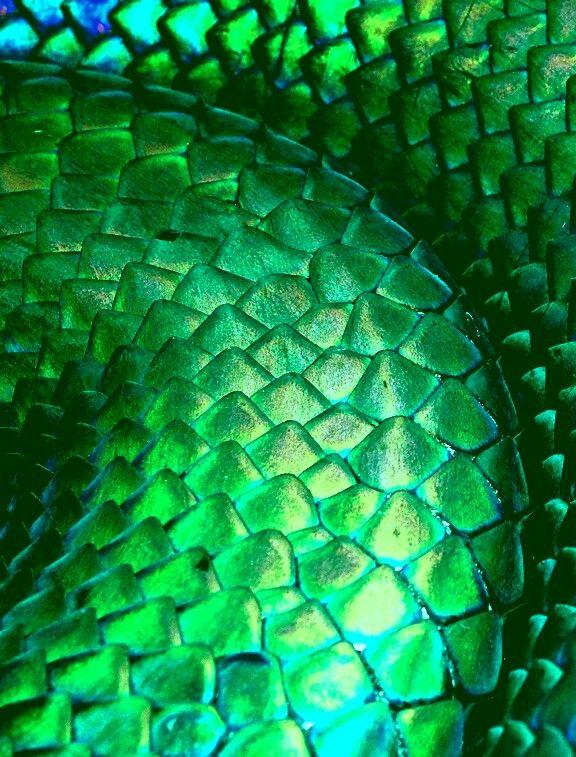 Escamas De Dragon Verde Dragon Verde Dragones Verde