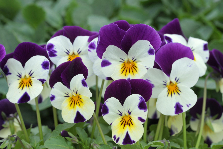 Winter Flowering Plant