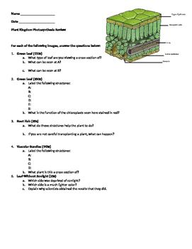Microviewer Worksheet Plant Kingdom Photosynthesis Review