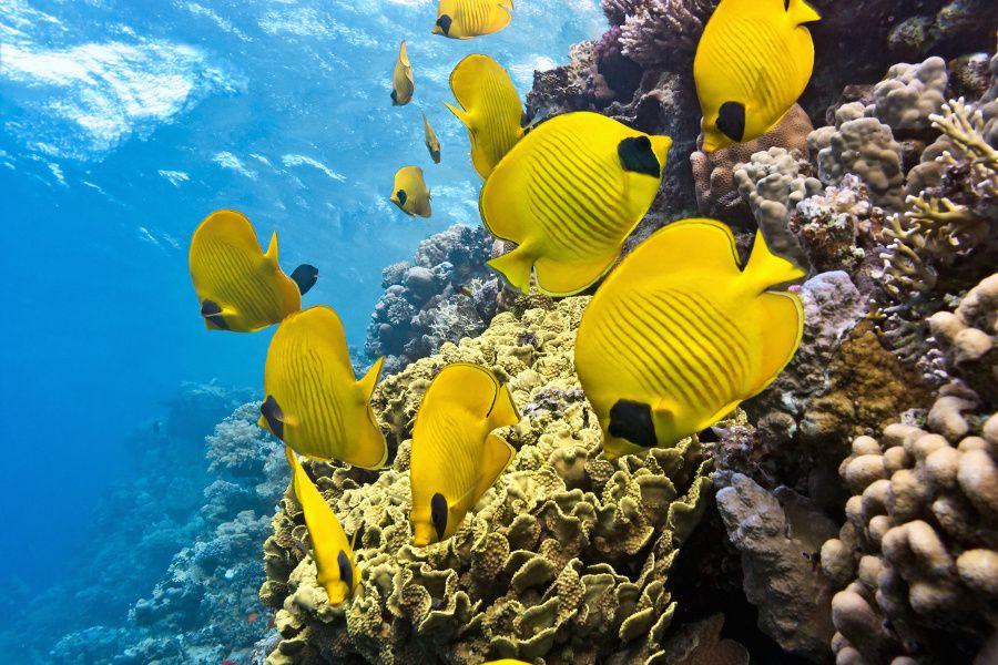 A Beginner S Guide To Tropical Fish Identification Okeanskaya Zhizn