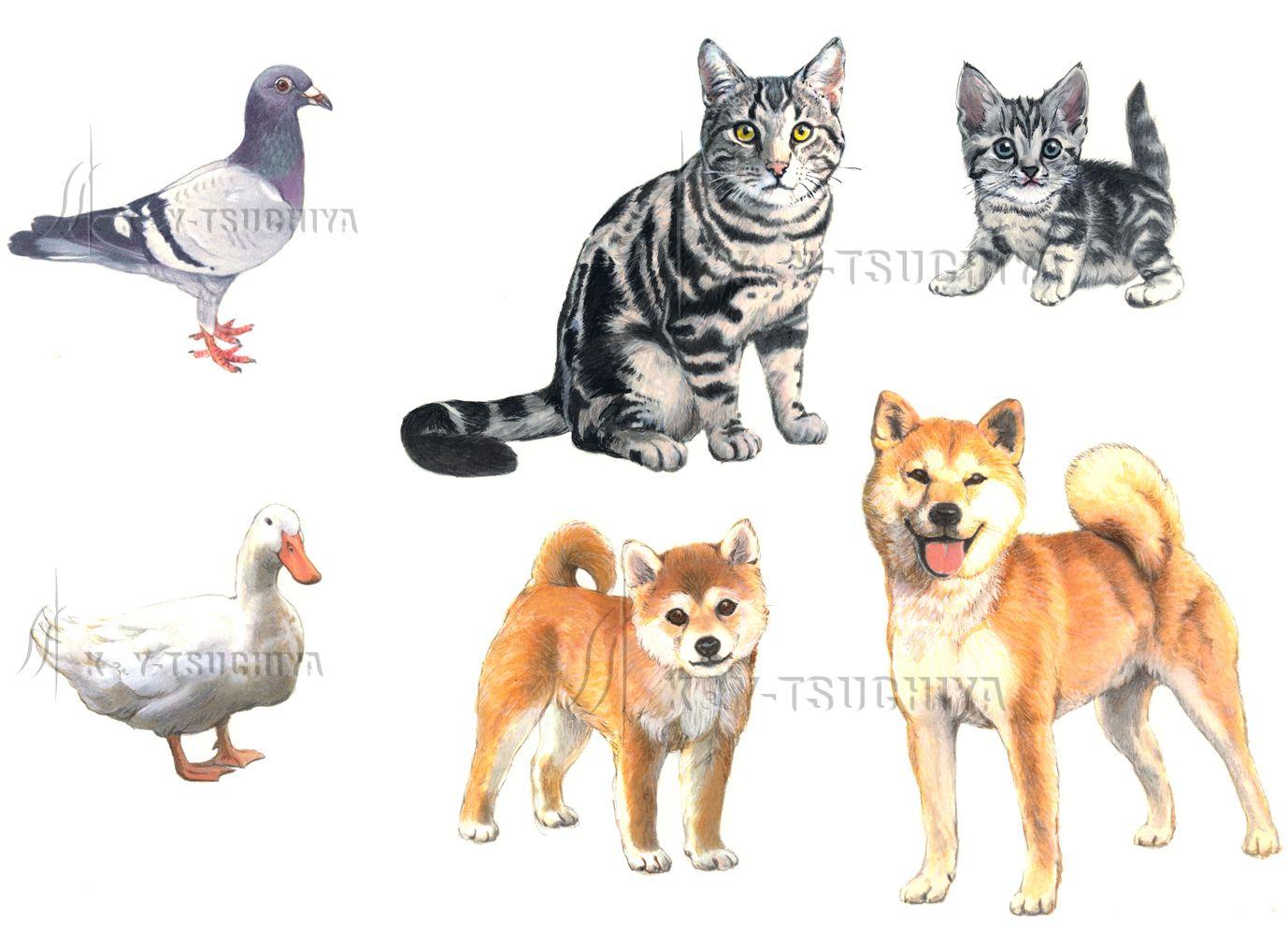 動物イラスト - google 検索 | むむっ・・かわいい | pinterest