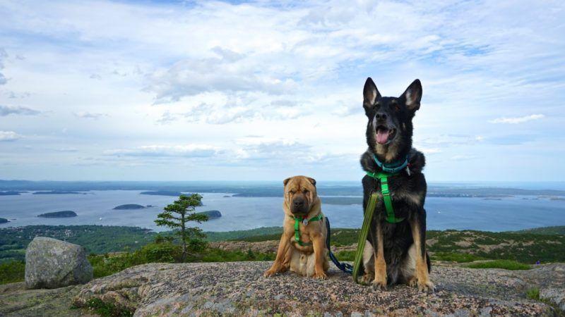 Acadia the pet friendly national park pet travel best