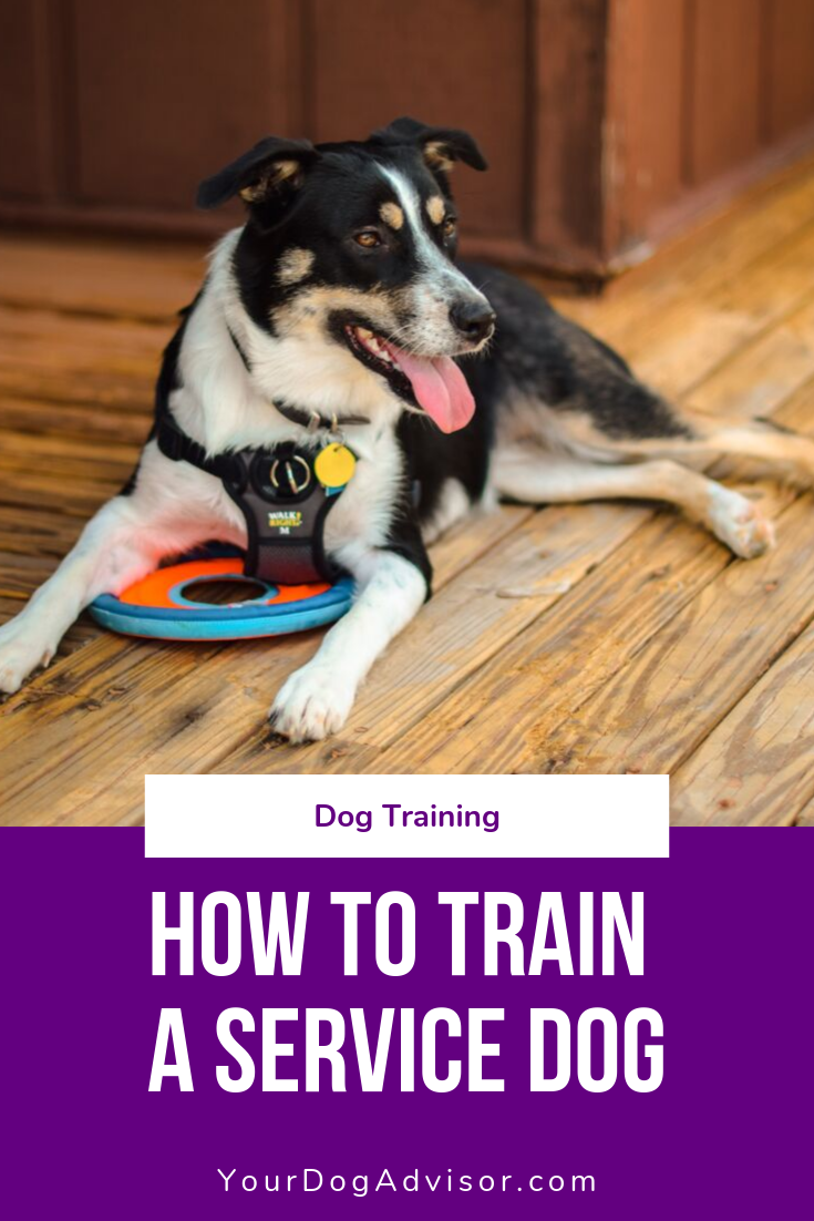 How To Train A Service Dog The Ultimate Guide In 2020 Service Dog Training Dog Training Service Dogs