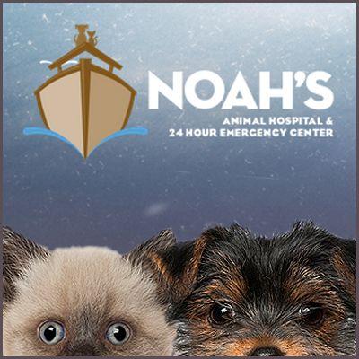 Welcome Animal Hospital Emergency Vet Animals
