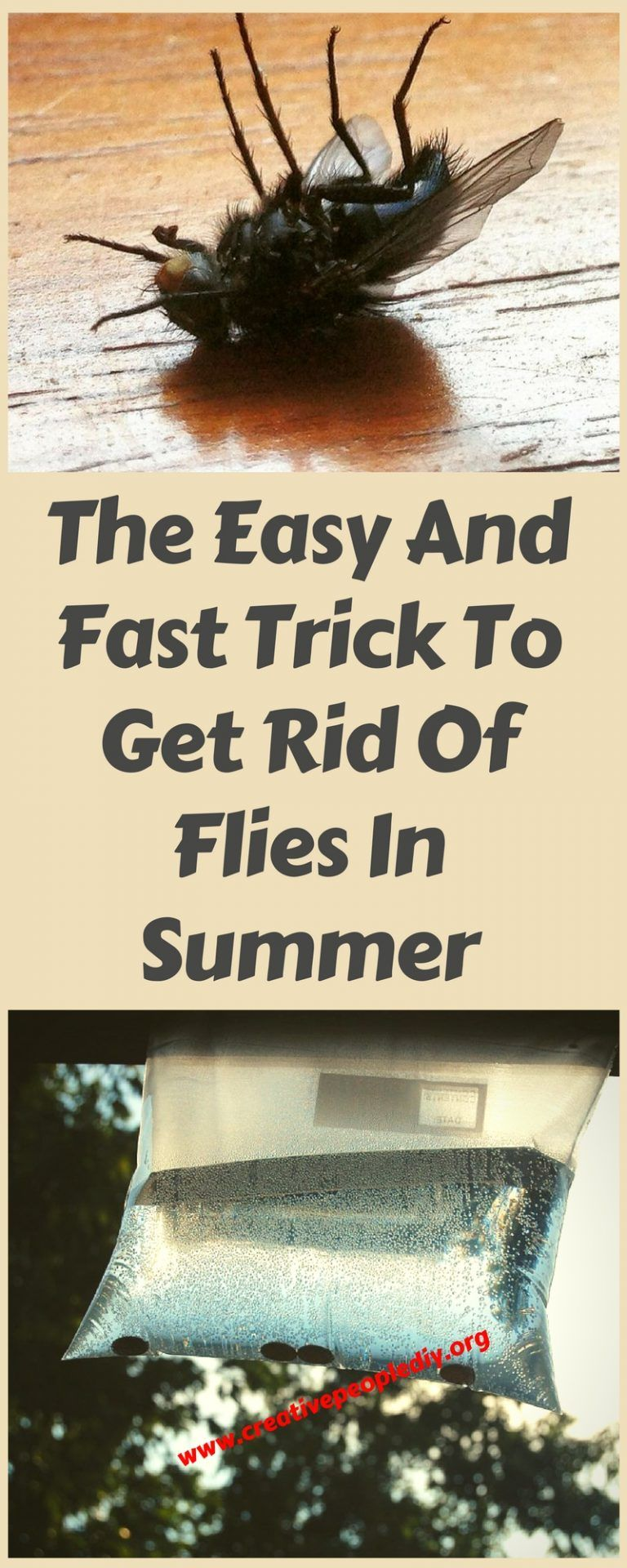 How to get rid of fruit flies in the kitchen cleaning tips diy