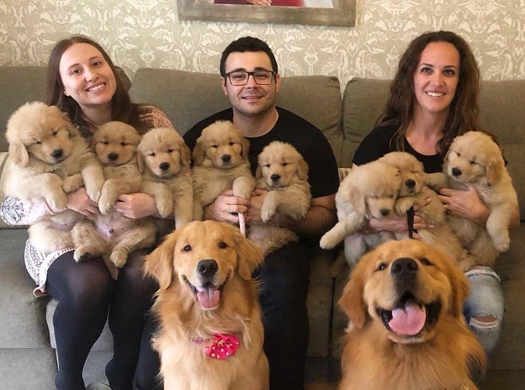 Golden Retrievers On Instagram Cutest Family Ever