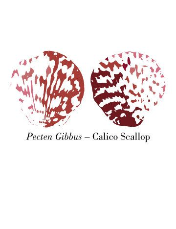 Calico Scallop Shells Card by WallpaperGirlCabinet on Etsy, $4.00