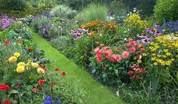Mehrjährige Blumen Die Den Ganzen Sommer Blühen