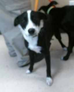 Adopt 30816058 A Lovely Dog Available For Adoption At Petango Com