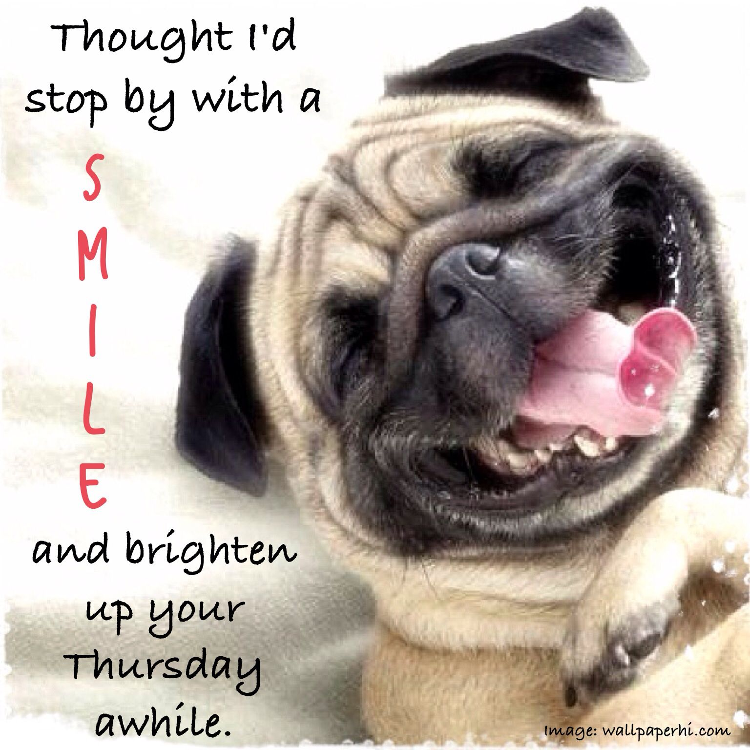 Thursday humor Animal funny Dog silly SMILE Half